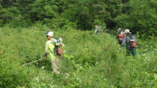 폭염 대비 숲가꾸기 사업장 안전대책 추진