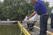 주남저수지사업소, 잉어 및 붕어 등 어린고기 방류