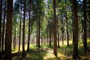 산림청, 9월 국유림 명품숲 '남해 편백 숲' 선정